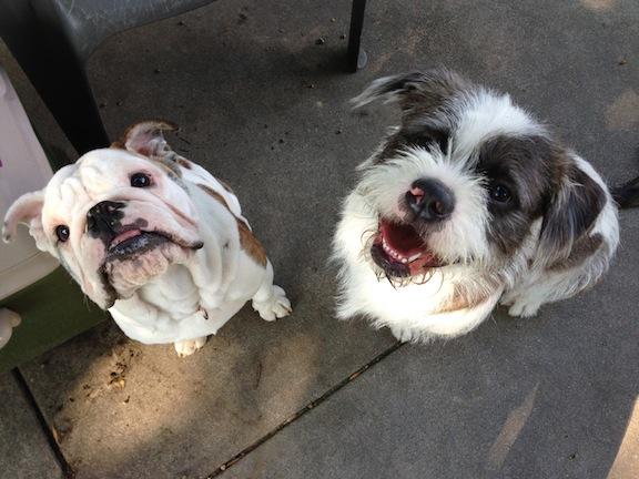 Walter and Mojo