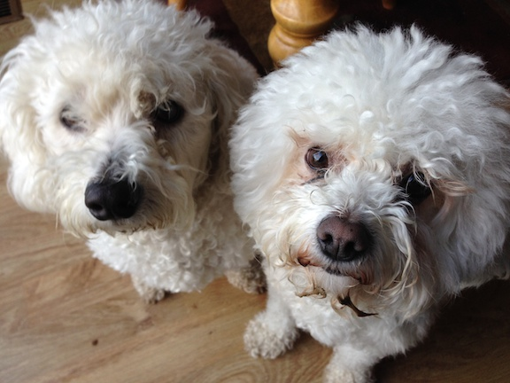 Toby and Sunny