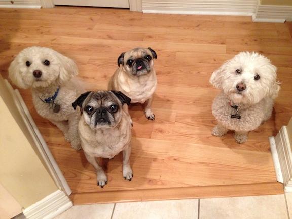 Benji, Skippy, Ellie and Fresly