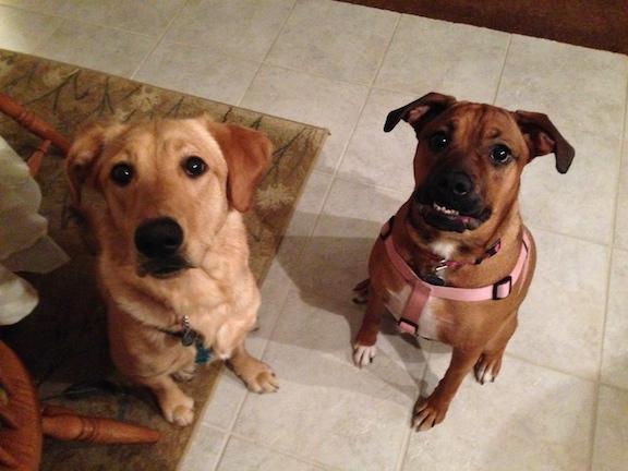 Lili and Graci