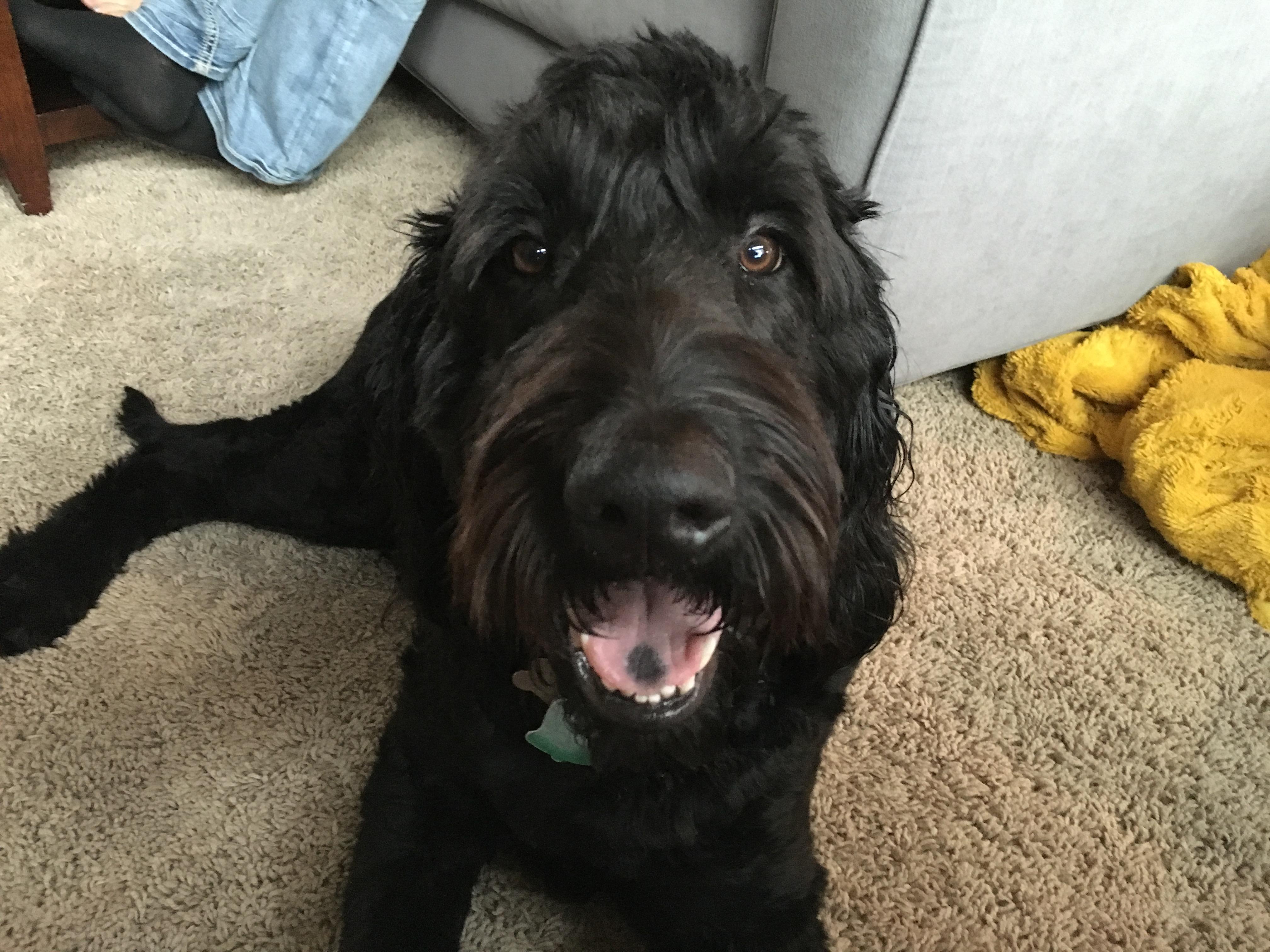A Good Feeling Dog Training
