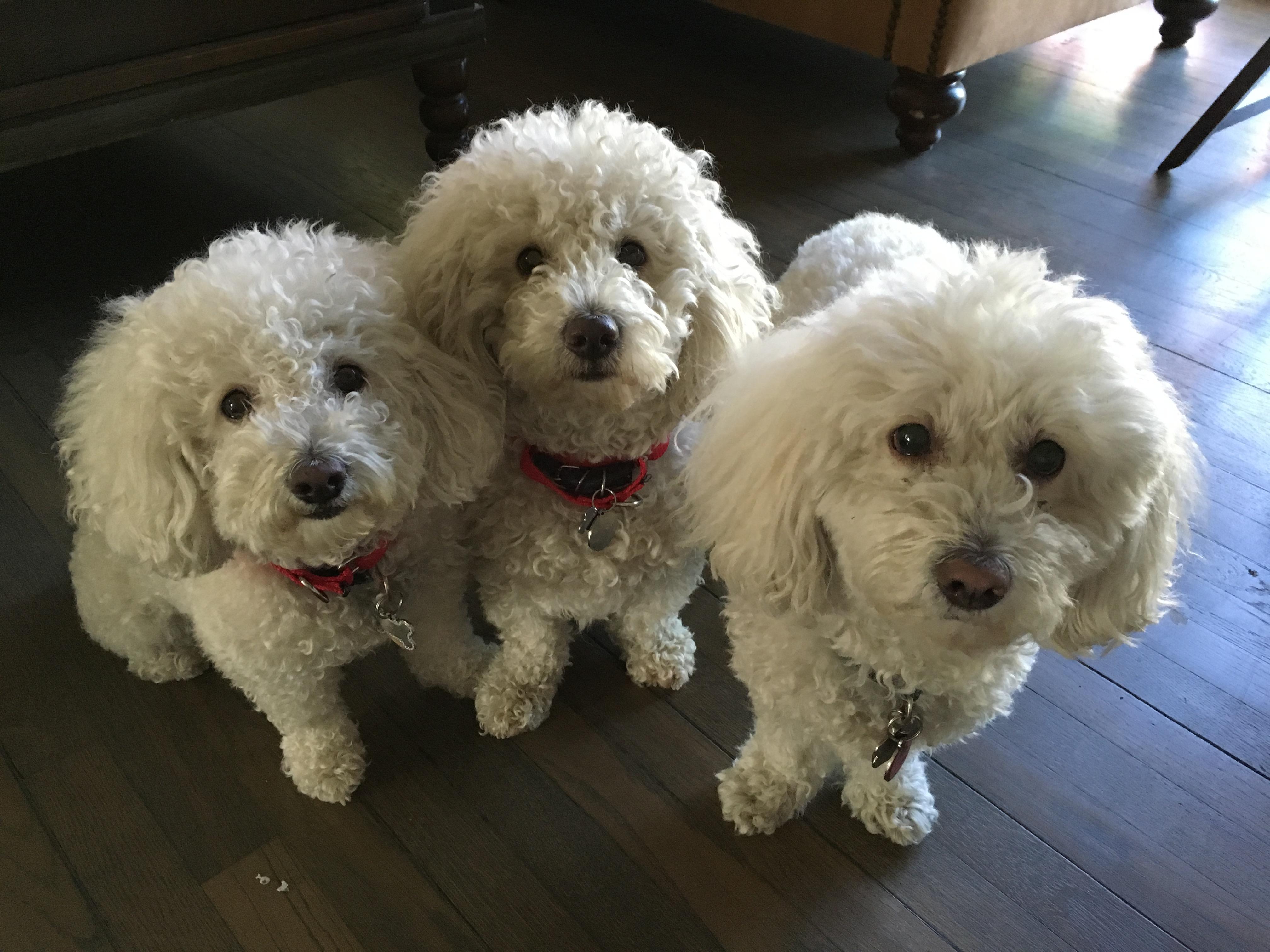 Booba, Motek and Bella