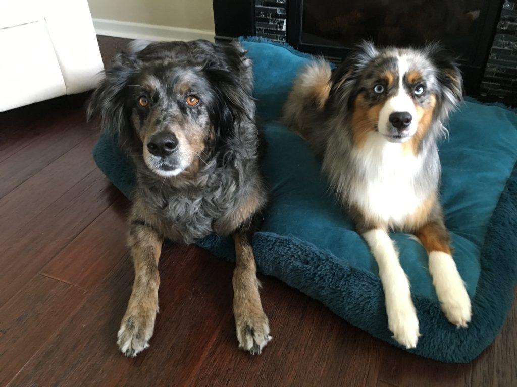 Bryda and Tucker