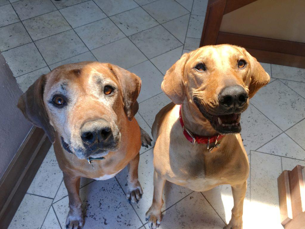 Duke and Seren