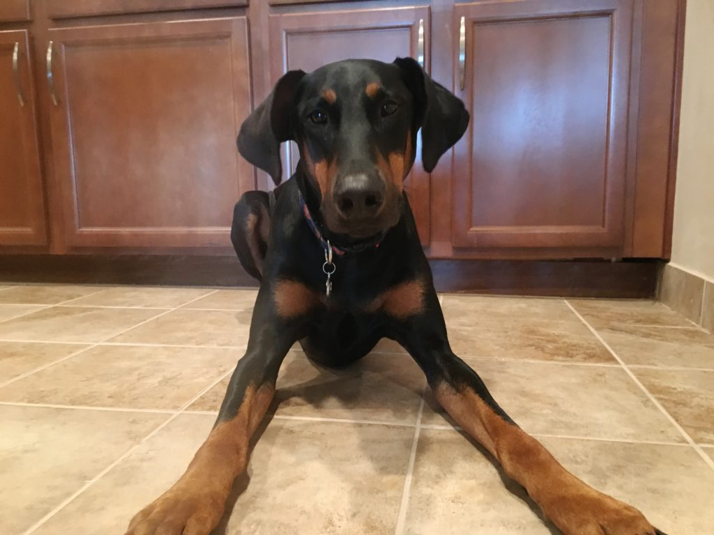 Mac Doberman