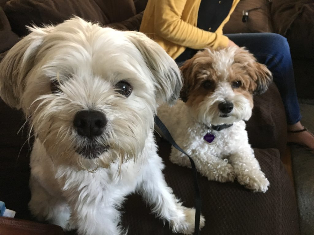 toby-and-shelby