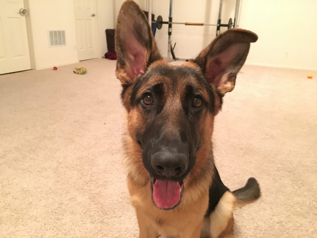 max-gsd-in-omaha