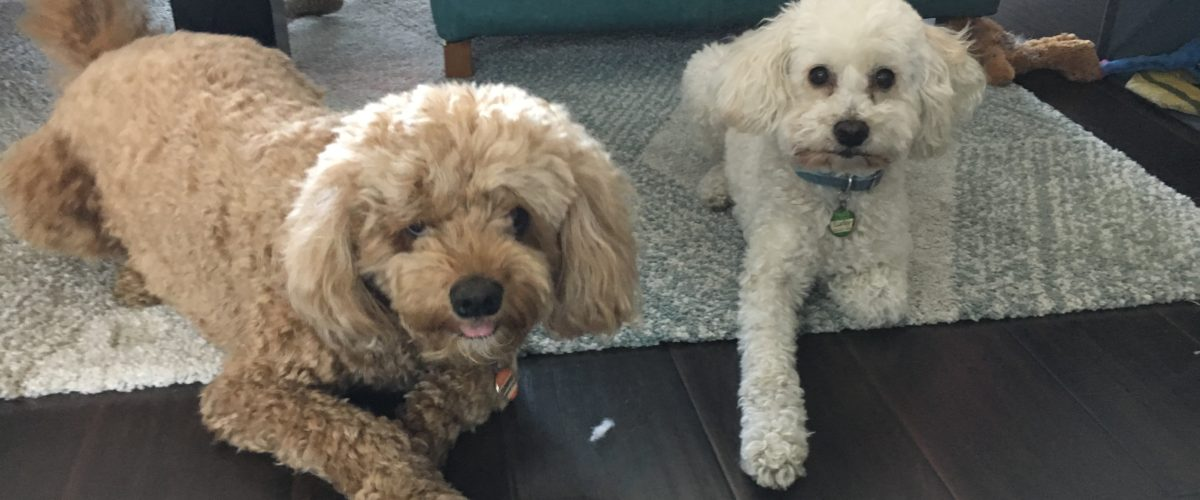 Teaching a Dog to Trust His Guardian's Leadership to Stop His Separation Anxiety