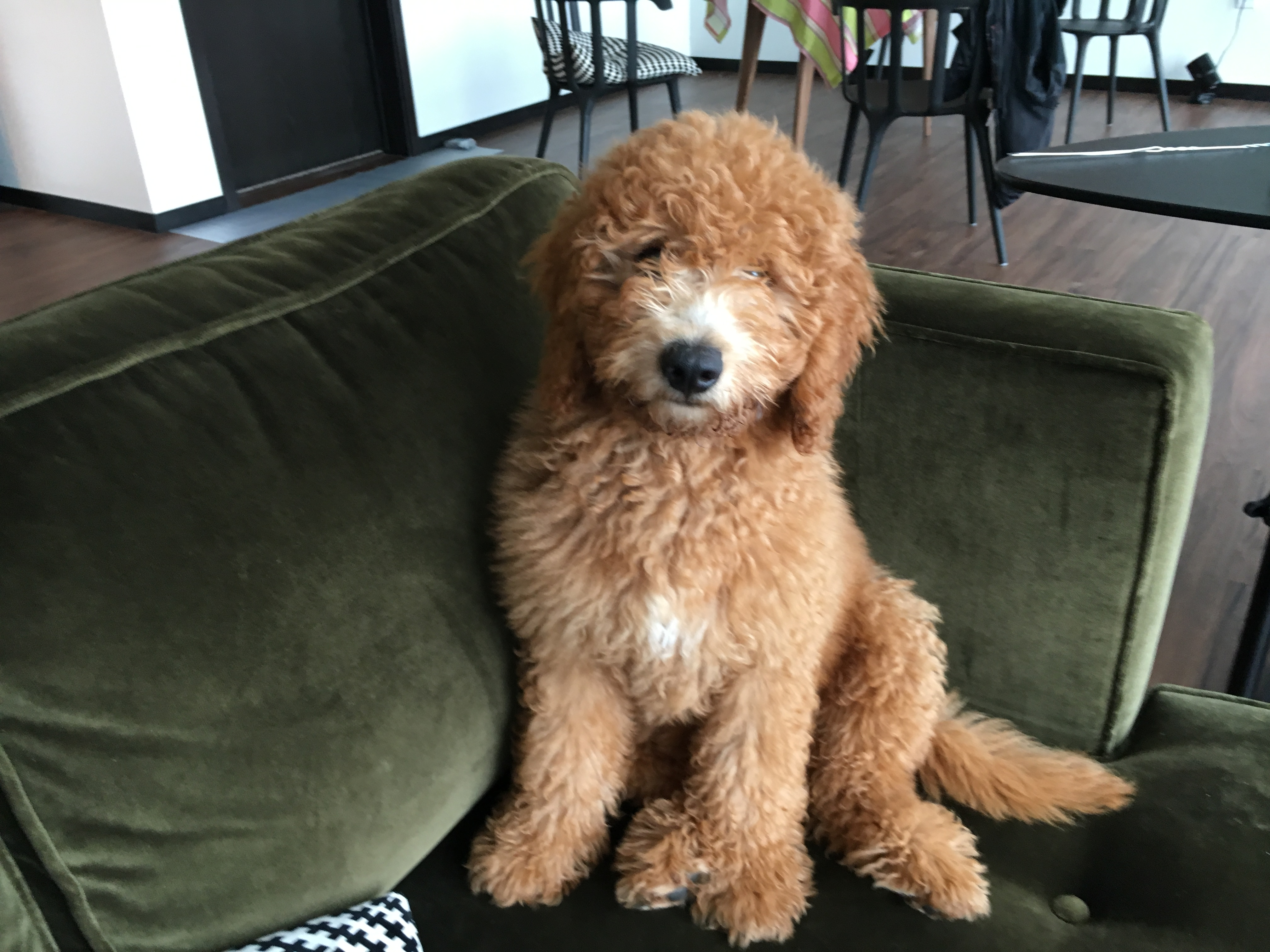 A Ton Of Free Omaha Puppy Training Tips And Tricks Dog Gone Problems
