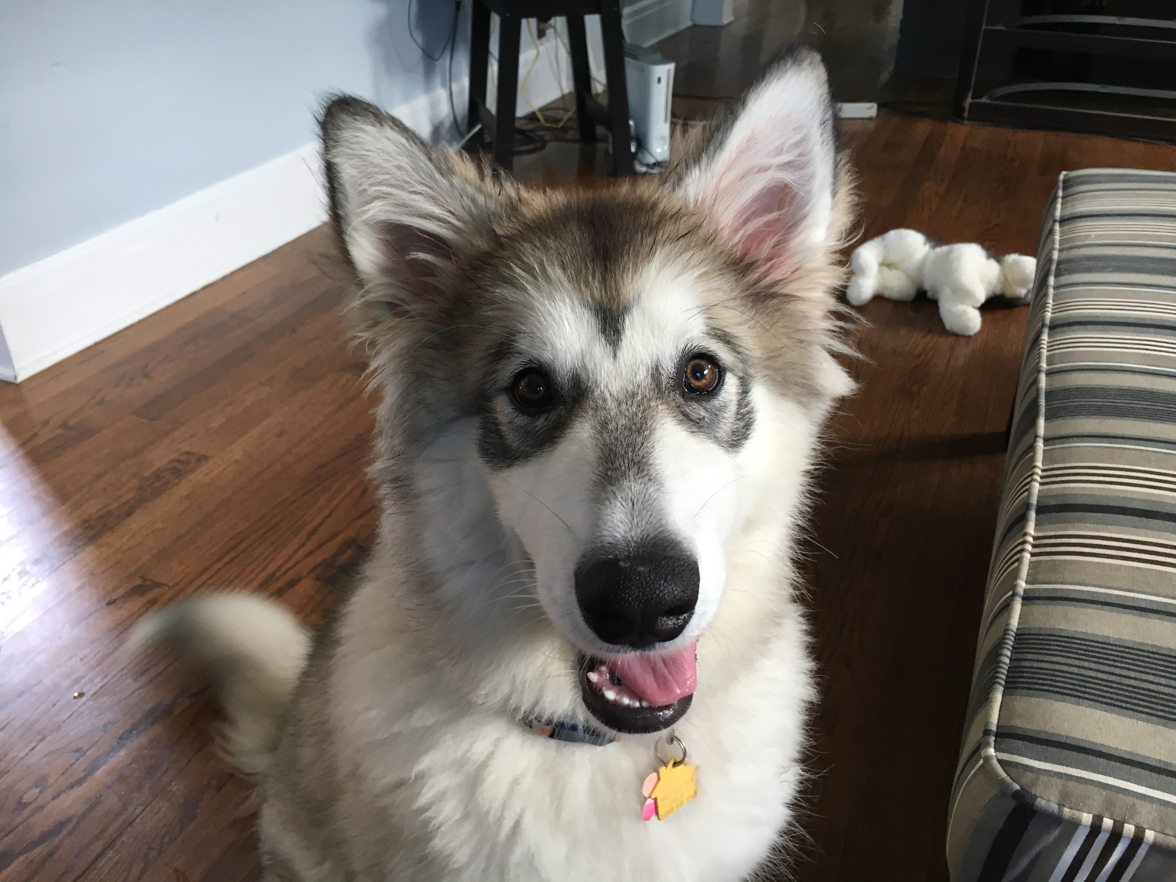 tips for kennel training a alaskan malamute puppy dog gone problems