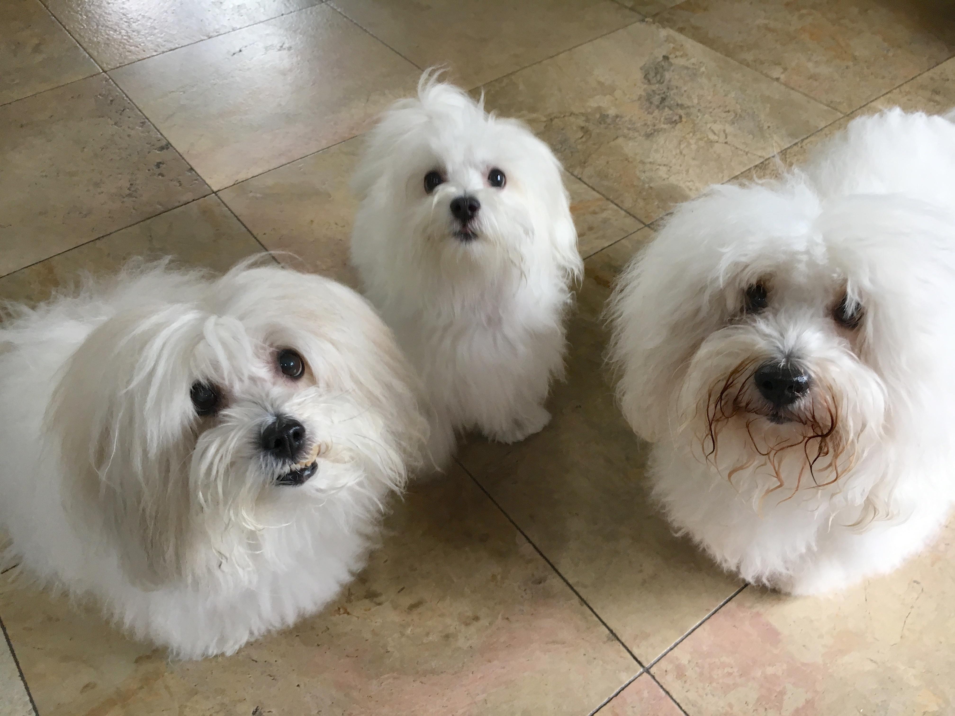 Dog Training Resource Guarding