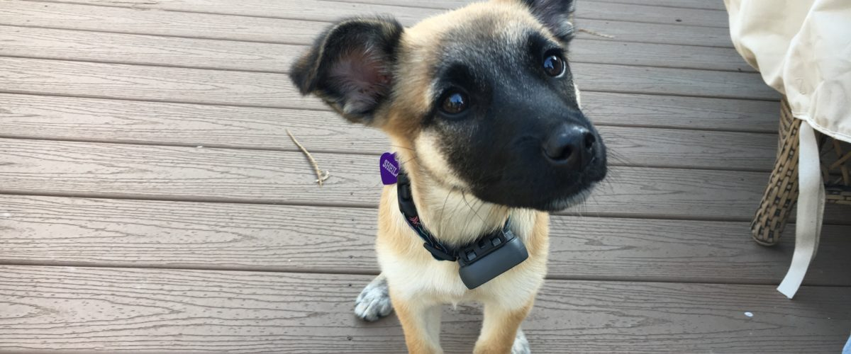Tips to Stop a Santa Monica Puppy From Nipping