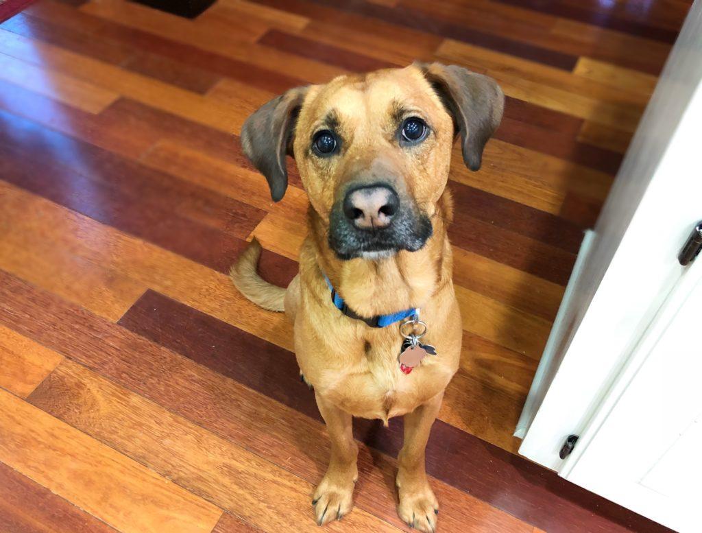 Dog Training Tips Barking At Strangers