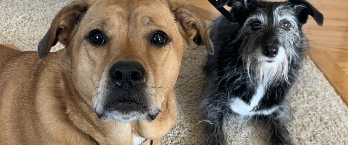 Tips to Stop a Dog From Attacking Another Dog in the House